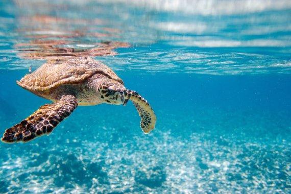 123rf.com nuotr./Seišeliuose galima sutikti tokių gyvūnų