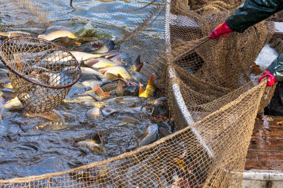 123RF.com nuotr./Žvejyba