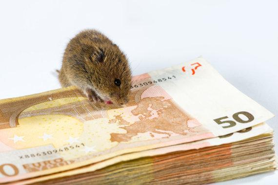 123RF.com nuotr./Pelė graužia pinigus