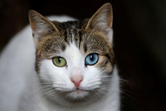 """Reuters""/""Scanpix"" nuotr./Stambulo katės"