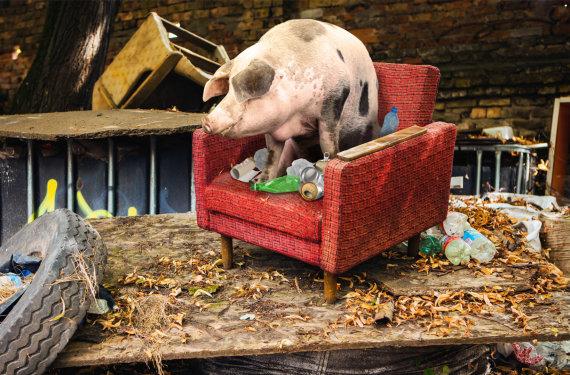 """Socialinė iniciatyva """"Ieškome kiaulių"""""""