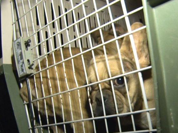 Skaitytojo nuotr./Kauno rajone iš galimai nelegalios daugyklos paimti 82 šunys