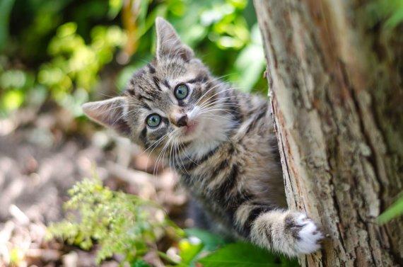 """""""PetCity"""" nuotr./Kačiukas"""