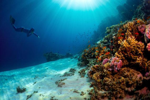 123rf.com /Nardymas Raudonojoje jūroje