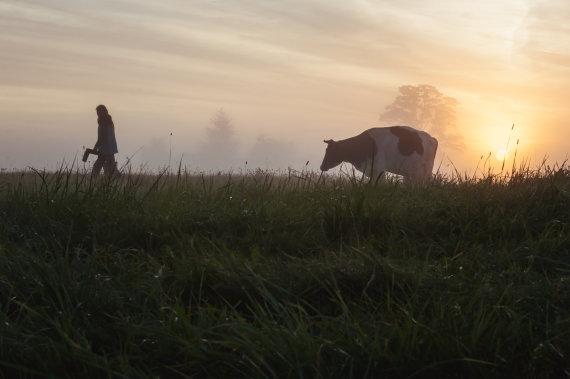 Astos Sabonytės nuotr. /Kaip Dubingiuose gimsta sūriai