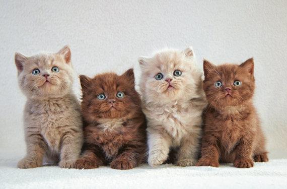 """""""Fotolia"""" nuotr./Kačiukai"""
