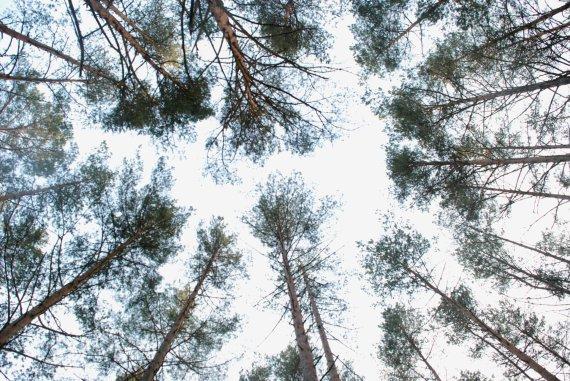 Jurgitos Lapienytės nuotr./Varėnos miškų urėdija