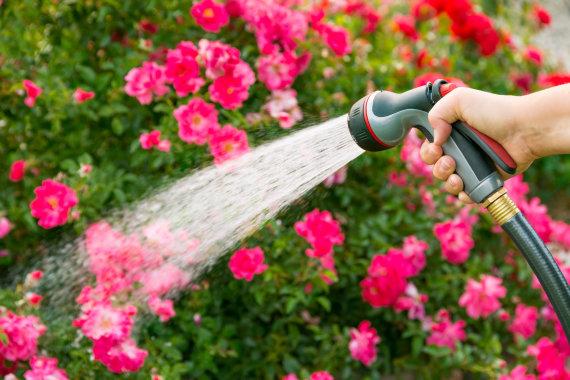 Fotolia nuotr./Gėlių laistymas