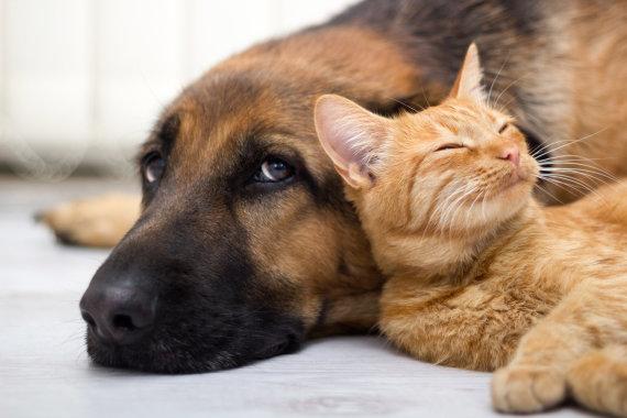 Fotolia nuotr./Šuo su kate.