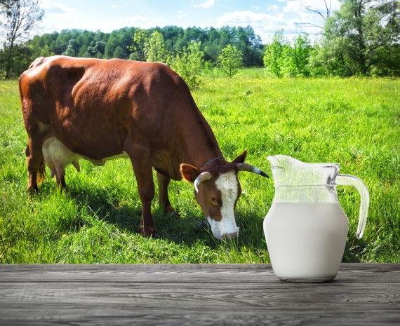 123RF.com nuotr./Karvės pienas