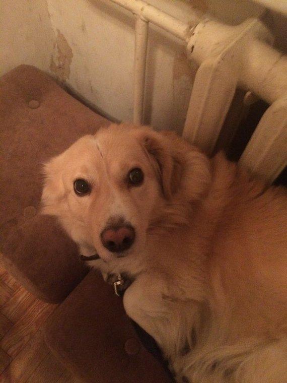 Pašilaičiuose, Vilniuje dingo šuo