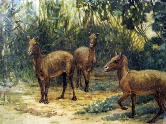 Arklių protėviai prieš beveik 50 milijonų metų turėjo keturis pirštus ant priekinių kojų ir tris ant galinių. (Charles R. Knight, Wikimedia)