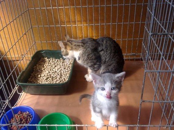 """GGN """"Nuaras"""" nuotr./Katė su kačiukais (Alytus)"""