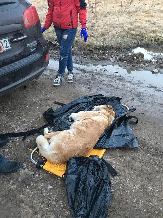 """Nuotrauka iš Kristinos M. """"Facebook"""" profilio/Salininkuose rastas nukankintas šuo"""