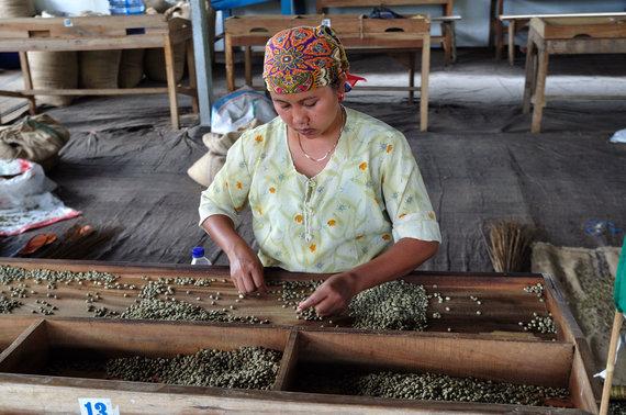 Vida Press nuotr./Moteris darbuojasi kavos ūkyje Indonezijoje