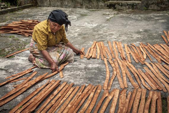 Vida Press nuotr./Cinamono žievė ruošiama džiovinimui Indonezijoje