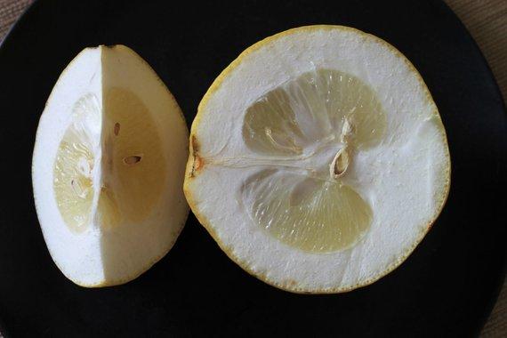 Jurgos Jurkevičienės nuotr. /Sorento citrinos