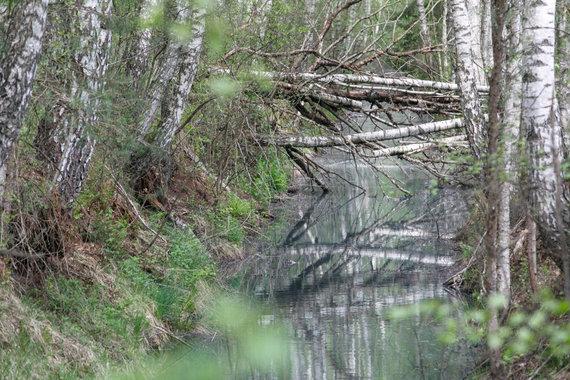 Eriko Ovčarenko / 15min nuotr./Užterštas vanduo Ežerėlyje