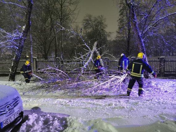 V. Balvočienės nuotr./Nuvirtę medžiai