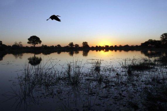 123rf.com nuotr./Okavango delta