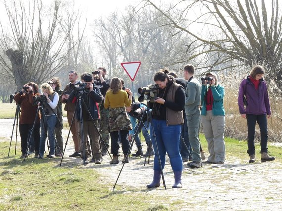 Mariaus Karlono nuotr./Paukščių stebėjimas