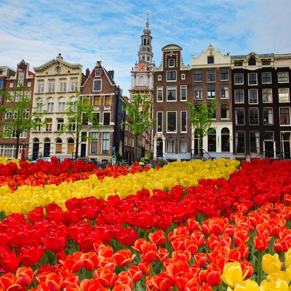 Shutterstock.com/Amsterdamo tulpynai