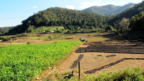 Shutterstock.com/Šiaurės Tailando gamta dovanoja daug natūraliai kosmetikai tinkamų augalų