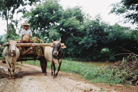 Asmeninės nuotr./Mianmaras. Atkakliai pirmyn. Nuotrauka padaryta 2013 metais