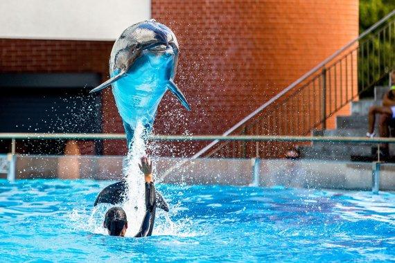 Jūrų muziejaus nuotr./Delfinų šou