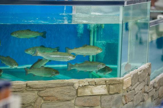 Juliaus Kalinsko / 15min nuotr./Gyvos žuvies akvariumas
