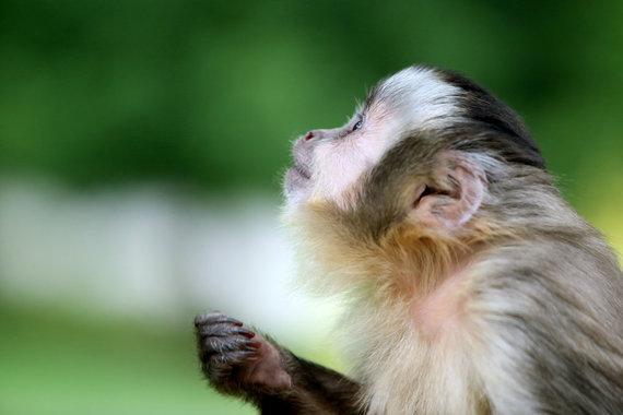 TV3 nuotr./Beždžionėlė. Asociatyvi nuotrauka