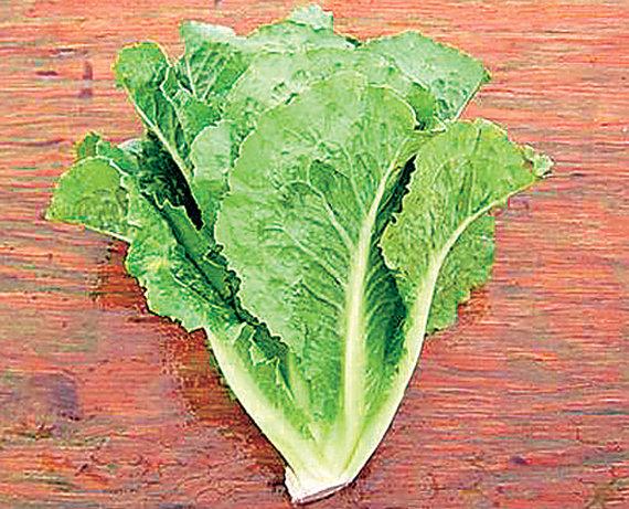 Romaninės salotos