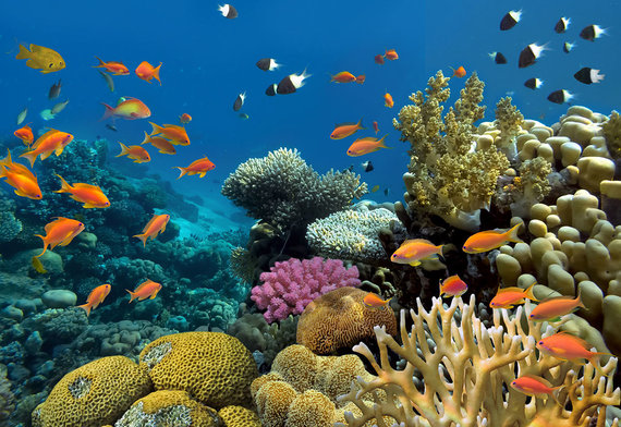 Shutterstock.com nuotr./Raudonosios jūros koraliniai rifai