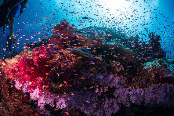 Shutterstock.com nuotr./Vaivorykštinis rifas