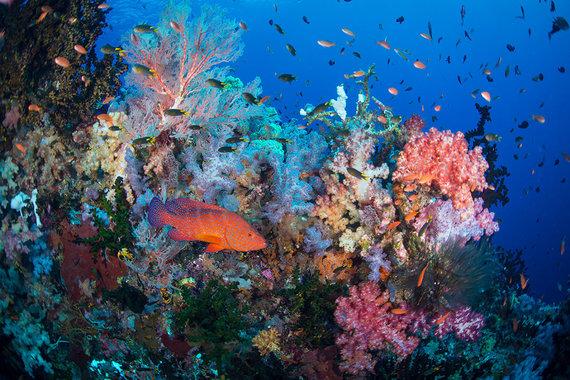 Shutterstock.com nuotr./Raja Ampat koralinis rifas