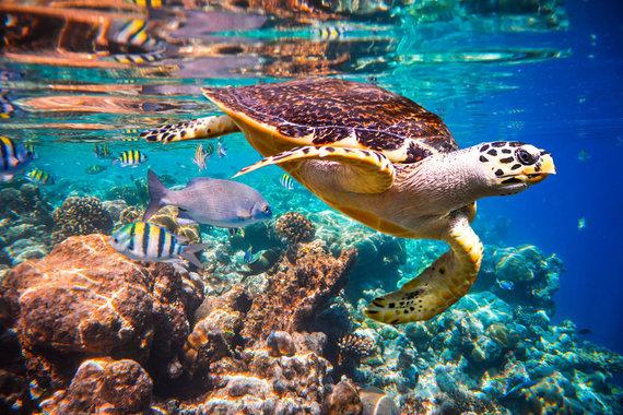 Shutterstock.com nuotr./Povandeninis pasaulis