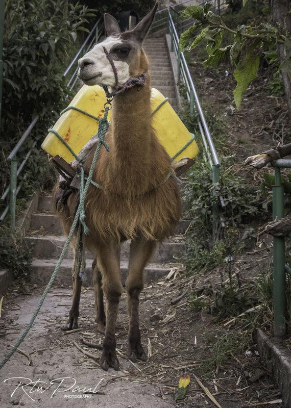Paul Stewart nuotr./Salinas Ekvadore