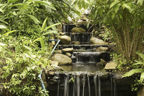 Shutterstock.com nuotr./Khao Phra Thaeo nacionalinis parkas