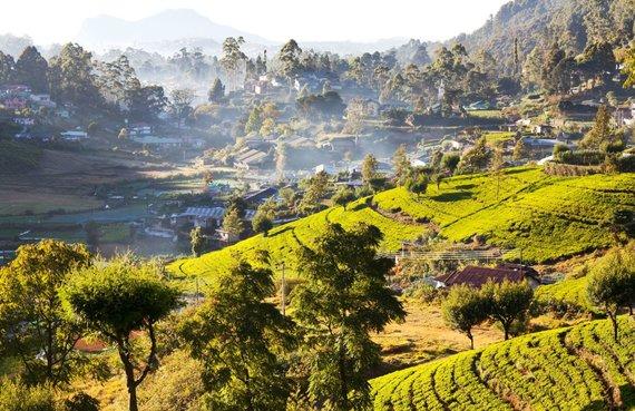 123rf.com nuotr./Šri Lanka
