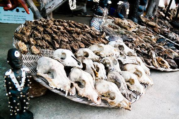 Shutterstock.com nuotr./Beninas