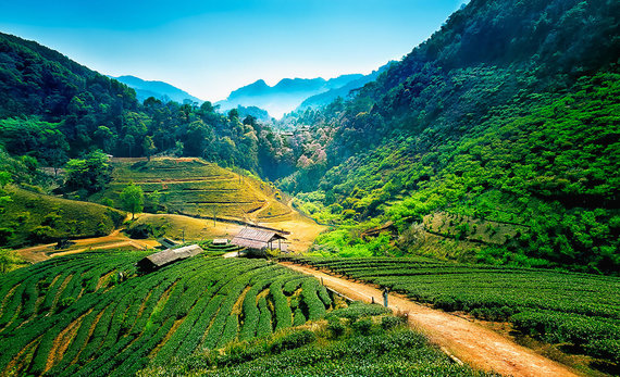 Shutterstock.com nuotr./Čiangmajus, Tailandas