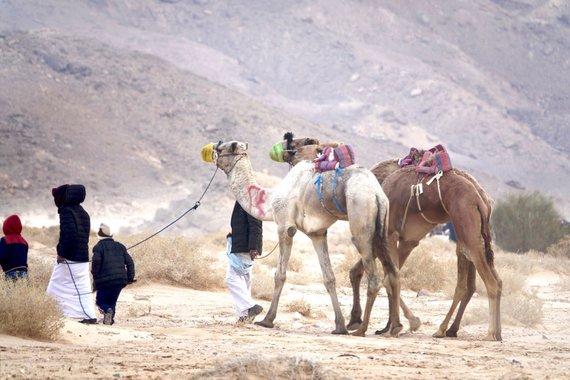 Asm.archyvo nuotr./Išvyka į kupranugarių lenktynes