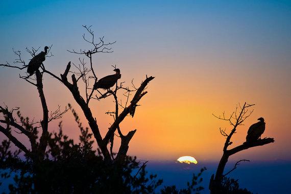 Shutterstock.com nuotr./Krugerio nacionalinis parkas, PAR