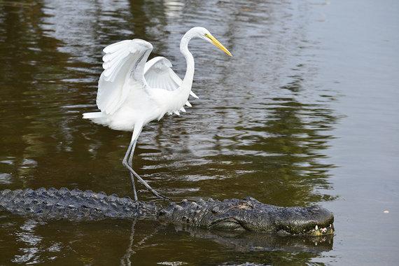 Shutterstock.com nuotr./Evergleidso nacionalinis parkas, JAV