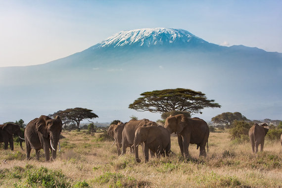 Shutterstock.com nuotr./Amboselio nacionalinis parkas