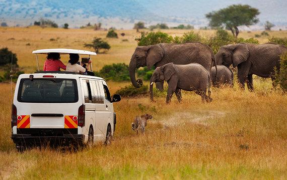Shutterstock.com nuotr./Masajų Maros nacionalinis rezervatas
