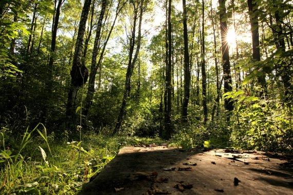 """""""Nesėdėk namuose"""" nuotr./Pažintinis takas Bijotų-Širvinto miškais"""