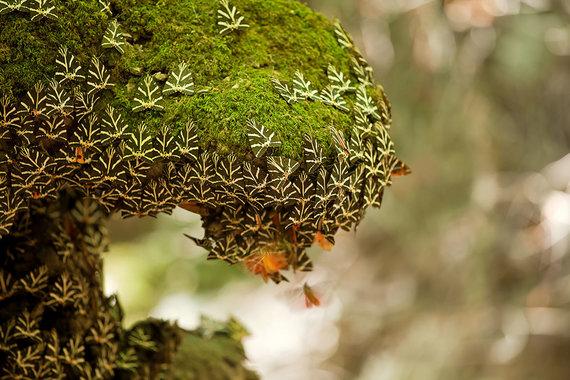Shutterstock.com nuotr./Drugelių slėnis, Rodo sala, Graikija
