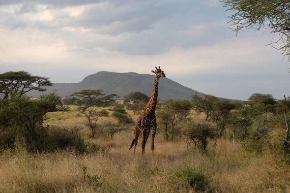 R.Rožinskienės nuotr./Kelionė Afrikoje