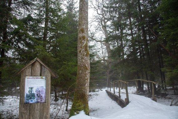 Nesėdėk namuose nuotr./Jomantų miško pažintinis takas